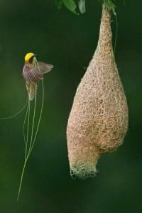 konstruksi srang burung